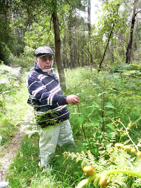 John admiring the Indian Weed Sigesbeckia orientalis a rare plant in our district