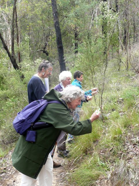 Philippa and the group checking Orange-anther Wallaby-grass