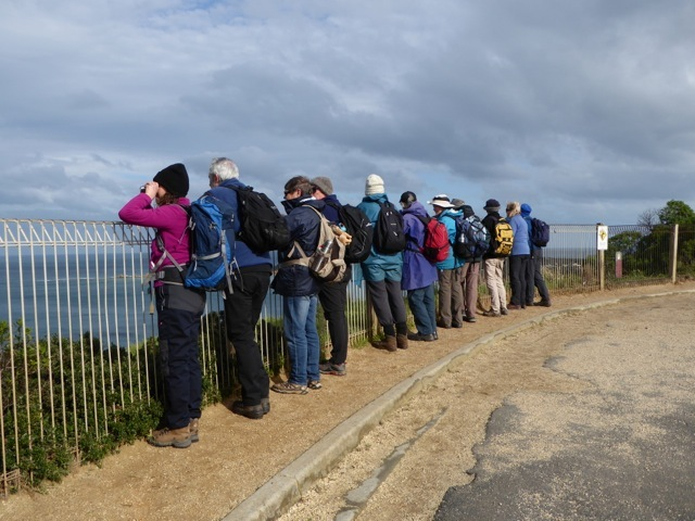 Observing Shy Albatrosses while looking for a whale offshore from the Lookout Reserve, Anglesea