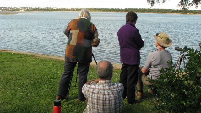 Wader-watching on the Barwon