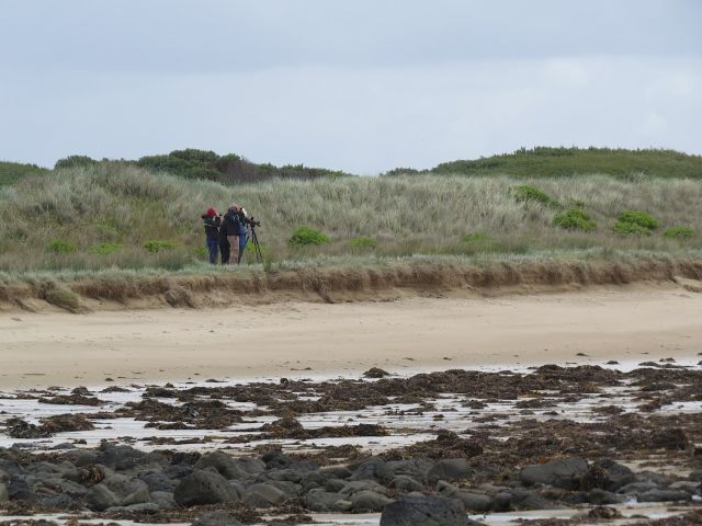 Birdwatching on Blue Rocks Beach