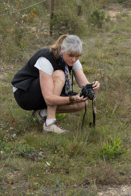 Chrissy photographing a Grass Trigger-plant