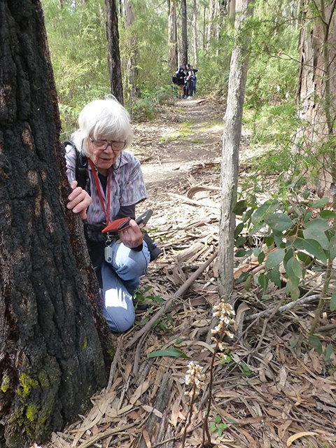 Pat from London was enthralled by the Cinnamon Bell orchids