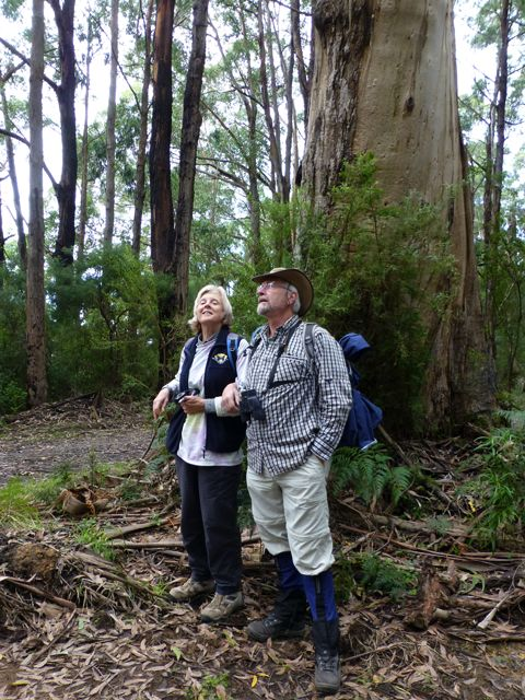 Alison and Phil dwarfed by the giant Mountain Ash