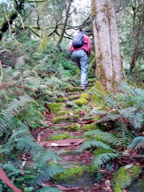 Lachie climbing the moss covered steps on the way back