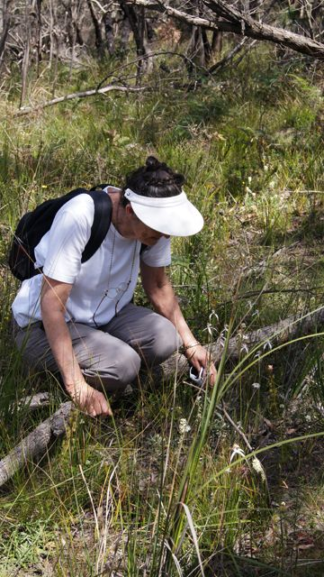Chris admires the Large White Spider Orchids