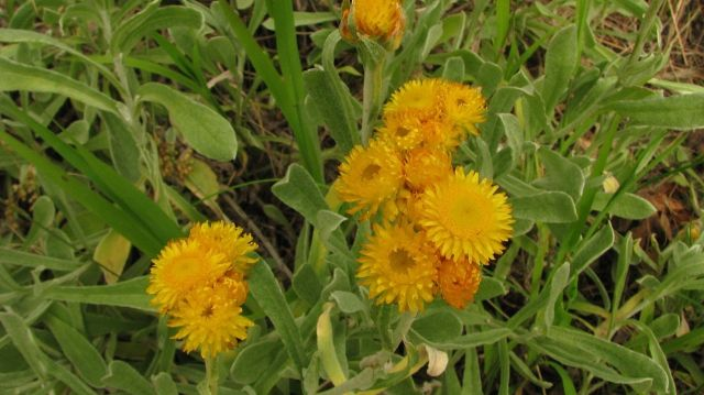 Common Everlasting